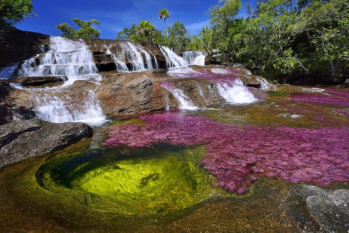река пяти цветов колумбия фото 2 (700x467, 534Kb)