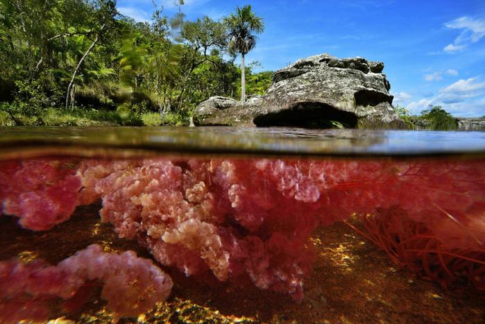 река пяти цветов колумбия фото 8 (700x467, 455Kb)