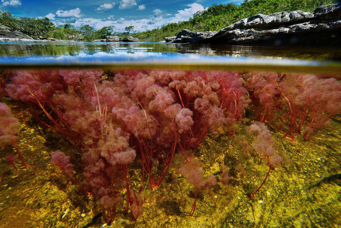 река пяти цветов колумбия фото 9 (700x467, 531Kb)