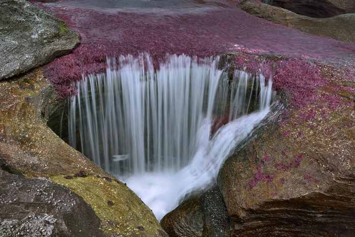 река пяти цветов колумбия фото 11 (700x467, 432Kb)