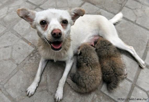 любовь животные26 (570x391, 123Kb)