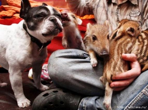 любовь животные20 (570x424, 150Kb)