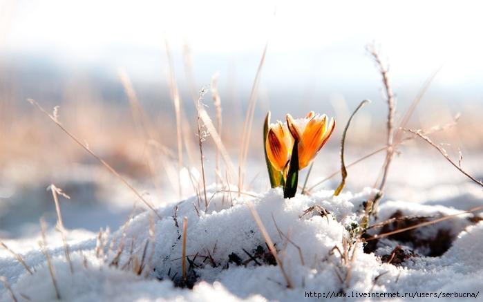 весна 1 (700x437, 179Kb)