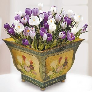 99262665_10_Crocus_In_A_Pot (300x300, 66Kb)