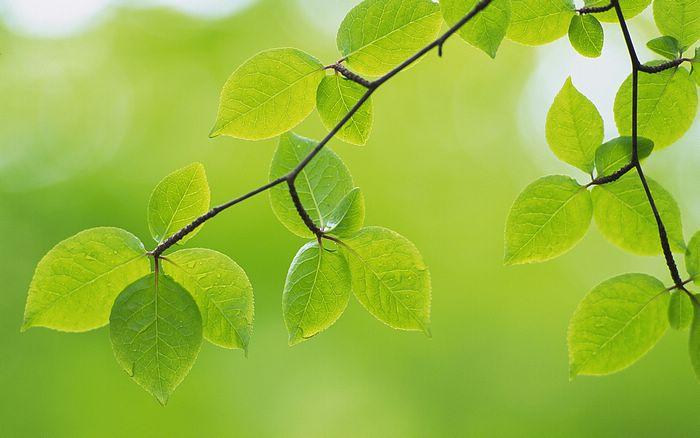 naturegreenleaves01 (700x438, 194Kb)