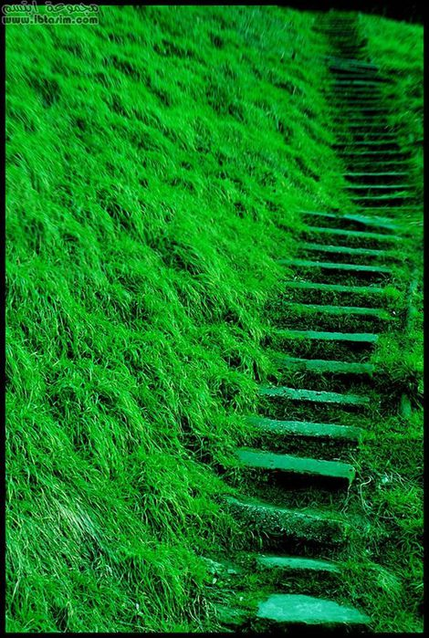 Green_Way_by_NoNicknameNeeded (470x700, 112Kb)