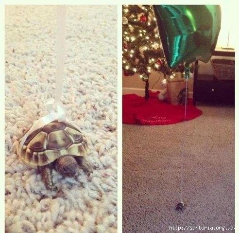 черепаха1 (492x479, 136Kb)