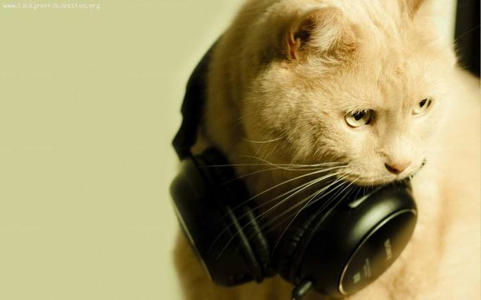 3180456_cats_wallpapers_dj1280x800 (700x437, 24Kb)