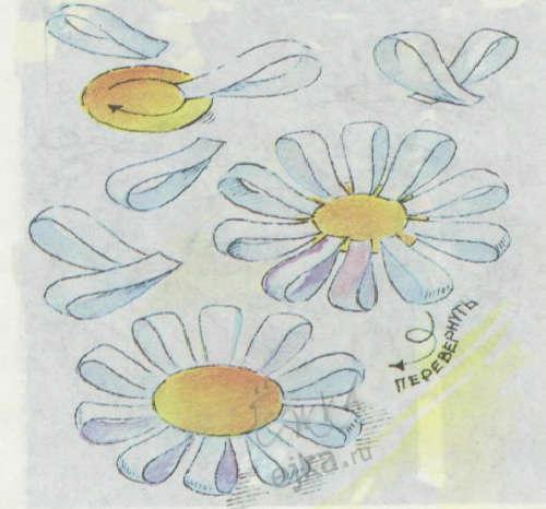 Хризантема — этот цветок