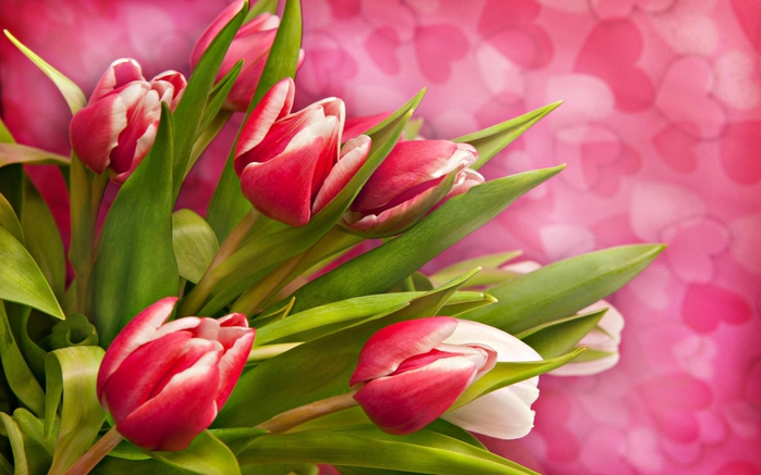 4278666_pretty_tulips991685 (700x437, 221Kb)
