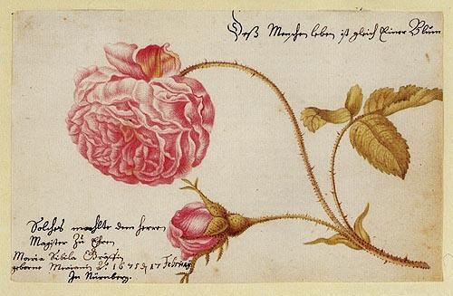 Картинки по запросу Мария Мериан цитаты