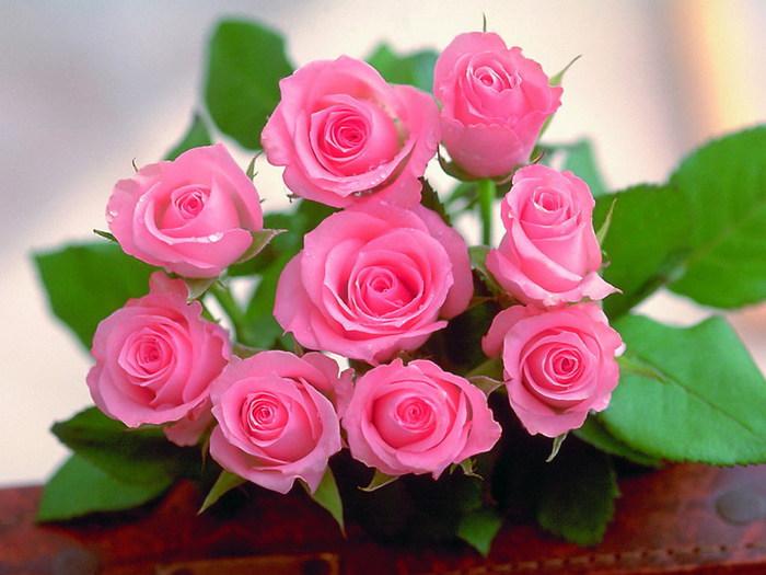 rainbow-rose-flower (700x525, 90Kb)
