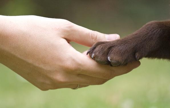 собака - друг человека/4348076_574640 (596x380, 54Kb)