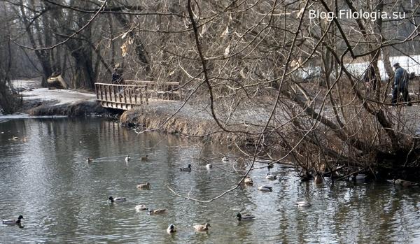 Плавающие утки в парке Покровское-Стрешнево в Москве./3241858_PS02 (600x349, 173Kb)