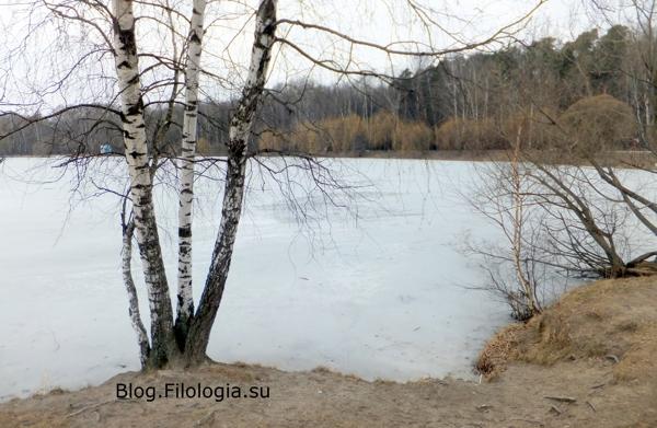 Белые березы на берегу озера в парке Покровское-Стрешнево на северо-западе Москвы/3241858_PS04 (600x391, 153Kb)