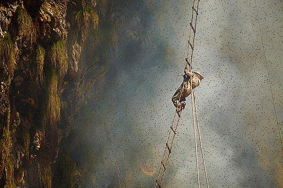 охотники за медом непал фото (570x380, 352Kb)