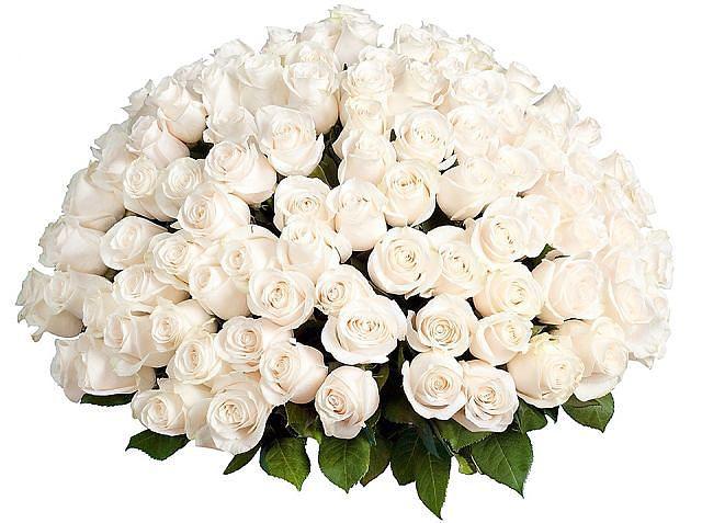 белые розы (640x477, 52Kb)