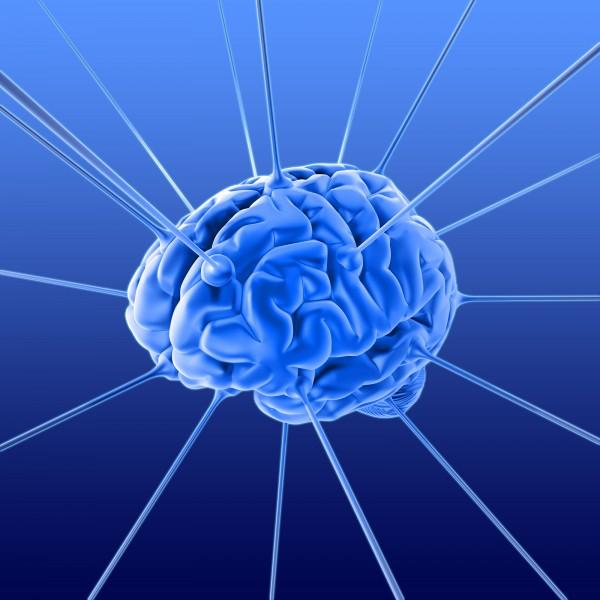 мозг 3 (600x600, 217Kb)