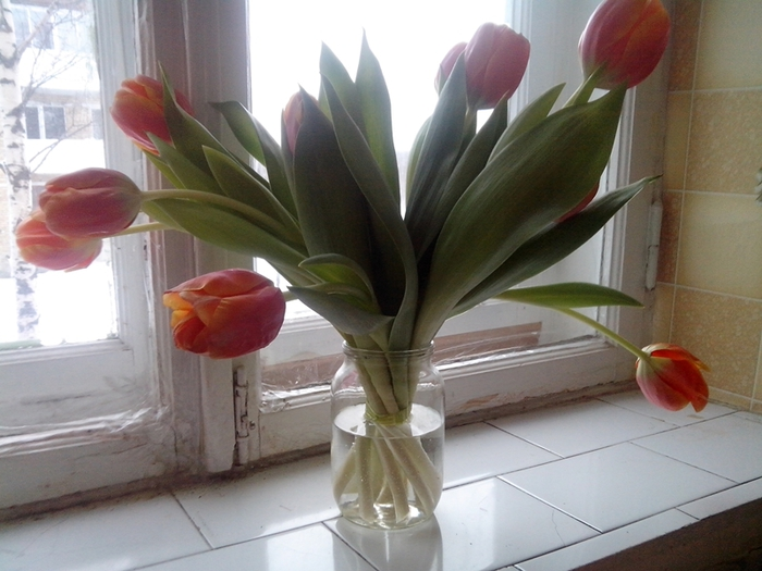 683584_tulip (700x525, 237Kb)