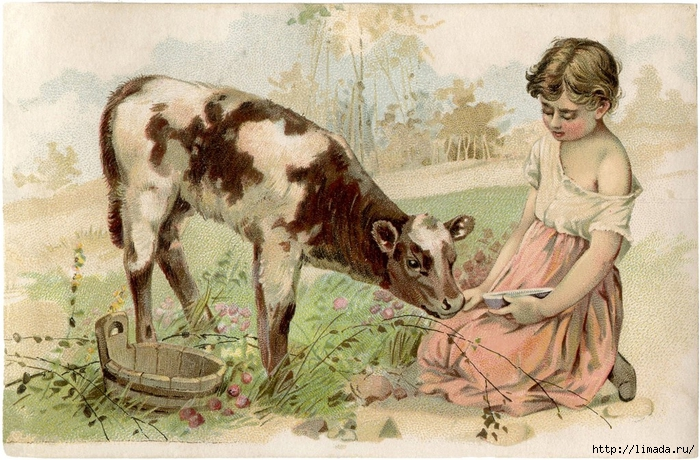 Free-Vintage-Calf-Image-GraphicsFairy-1024x673 (700x460, 324Kb)