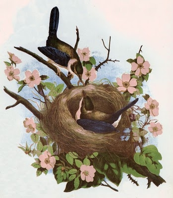 birdswnestpink (349x400, 104Kb)