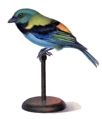 Vintage-Bird-Stand-GraphicsFairy2 (344x400, 68Kb)