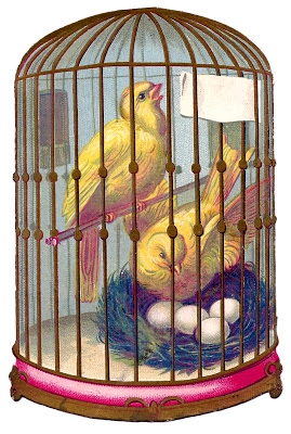 Canary-Bird-Cage-Image-GraphicsFairy2 (269x400, 134Kb)