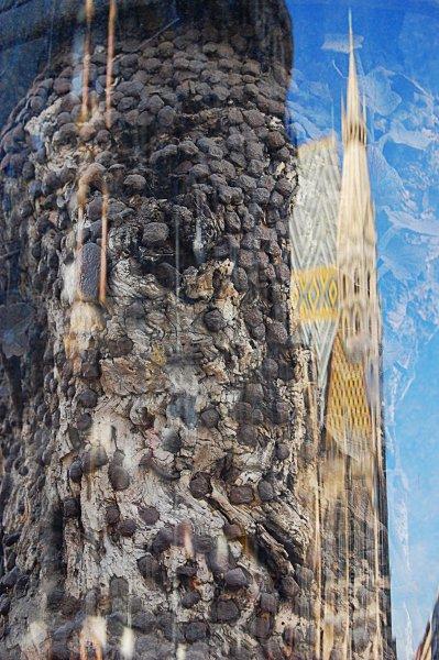 Шток-им-Айзен-Плац дерево с гвоздями 2 (399x600, 300Kb)