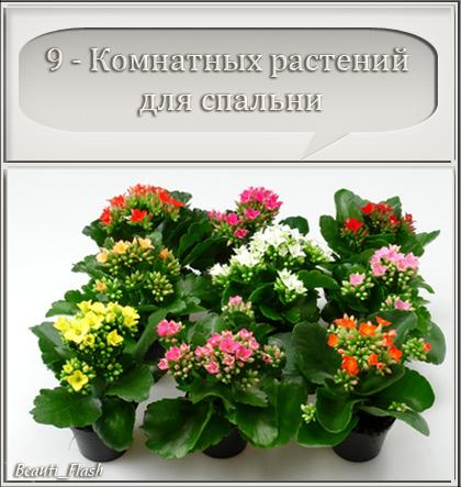 4303489_aramat_0205f (420x443, 187Kb)