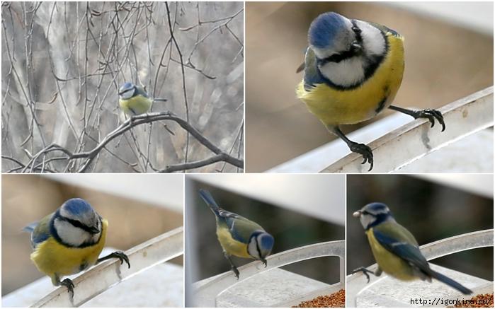 птицы2 (700x437, 224Kb)