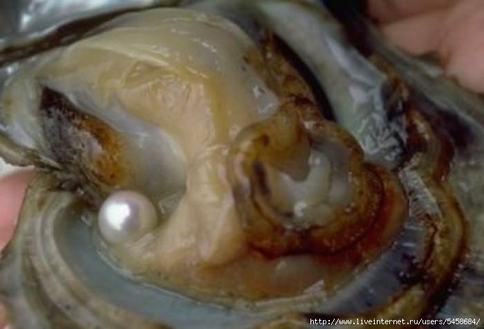 Как избавится от моллюска в домашних условиях