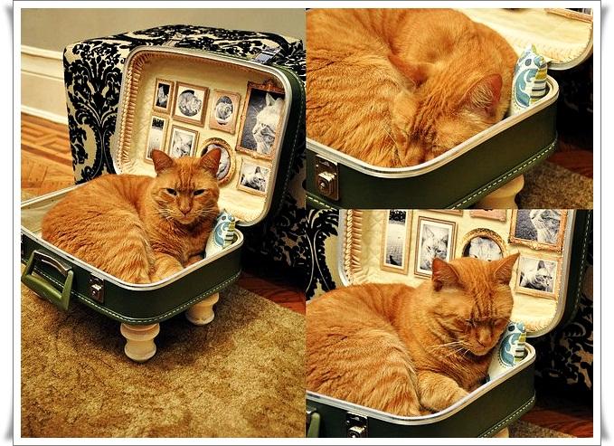 Как сделать спальное место для кота своими руками