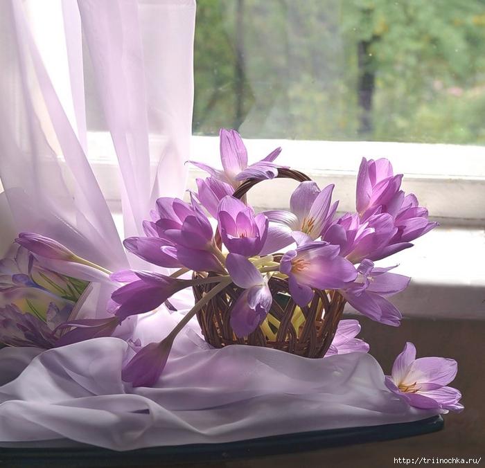 Ты как цветок весной прекрасная