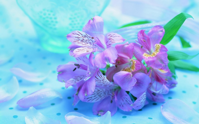 hq-wallpapers_ru_flowers_70271_2560x1600 (700x437, 192Kb)