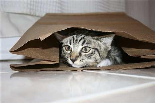 Коты и кошки в пакетах2 (512x341, 57Kb)