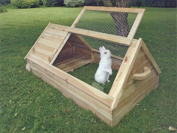 кролики 14 (600x450, 323Kb)