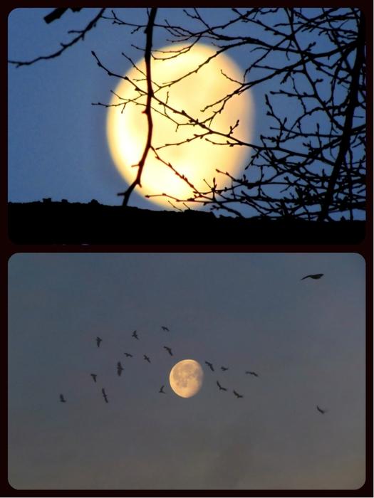 collage луна (525x700, 202Kb)