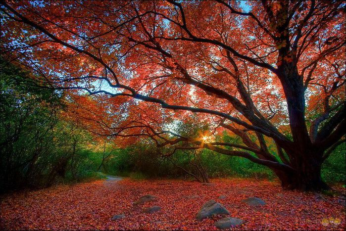 1349427596_autumn-colours-011 (700x467, 128Kb)