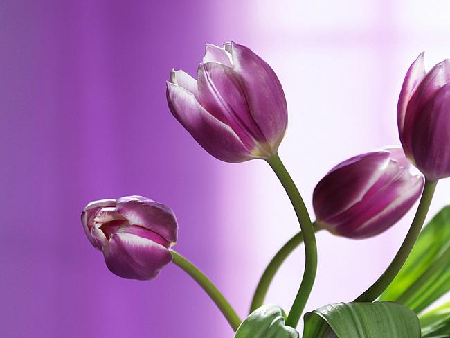 фиолетовый цвет 3 (650x488, 228Kb)