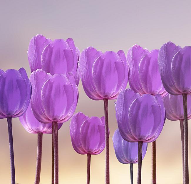 фиолетовый цвет 7 (650x626, 324Kb)