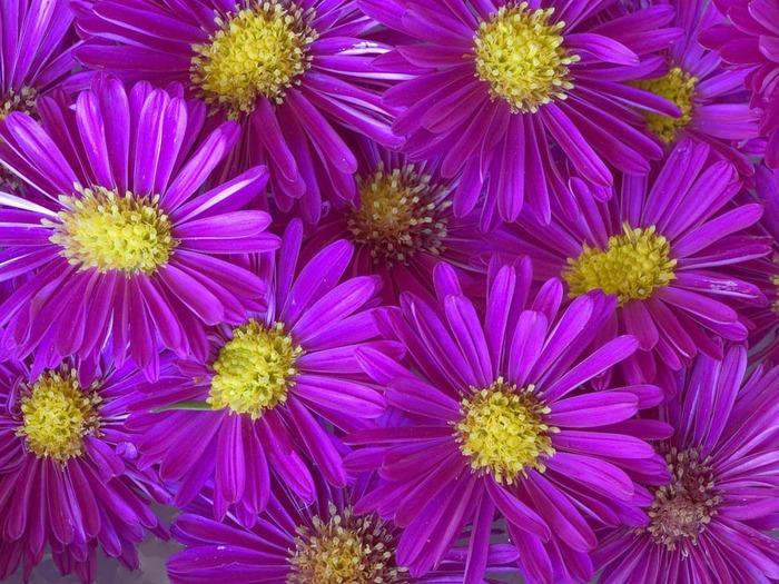 фиолетовый цвет 14 (700x525, 497Kb)