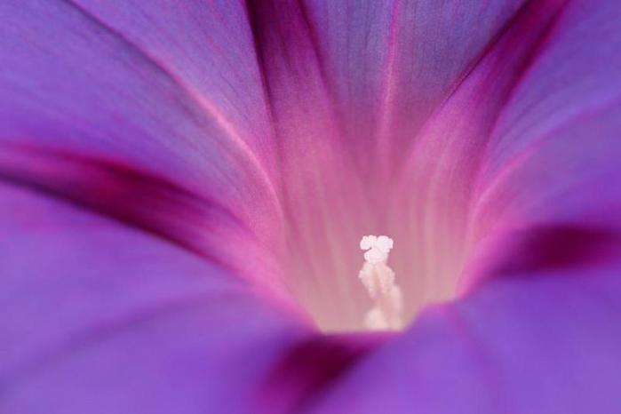фиолетовый цвет 16 (699x466, 145Kb)