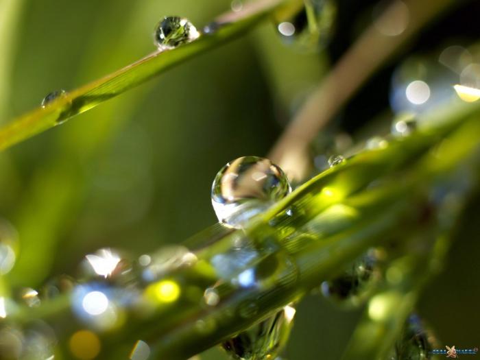 Капелька Капельки Дождя