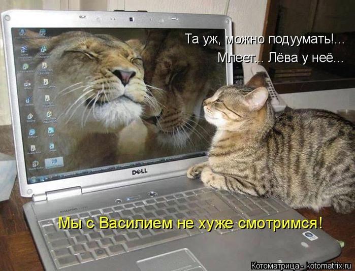 kotomatritsa_Wj (700x534, 272Kb)