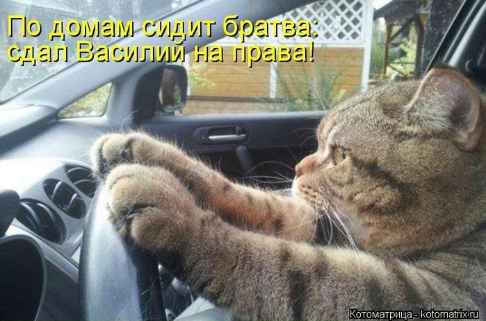 kotomatritsa_7A (700x463, 252Kb)
