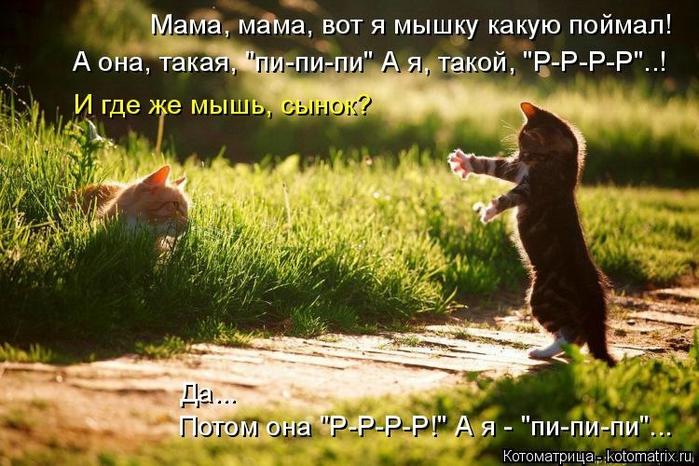 kotomatritsa_MP (700x466, 281Kb)