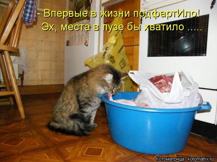 kotomatritsa_R (700x524, 262Kb)