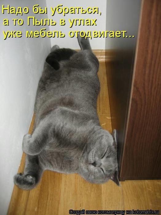 kotomatritsa_wM (524x700, 208Kb)