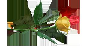 три цветка  лежа1 (300x163, 50Kb)