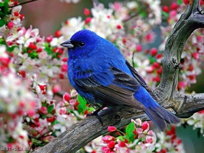Как привлечь птиц на участок в сад?